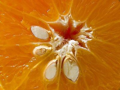 Sementes de laranja